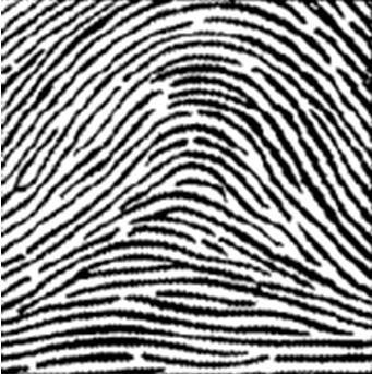 IMPRONTE DIGITALI e DNA SPIRITUALE – Impronte ad ARCO